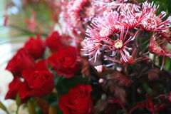 Flowers and roses. Picture of Flowers and roses Stock Photography
