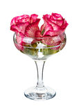 Flowers roses floating in the glass Royalty Free Stock Photos