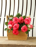 Flowers roses in a vase Stock Photos