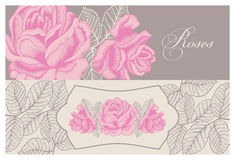 Flowers. Roses. Vintage. Vector illustration. Stylish card. Botany. Floral pattern. Stock Photos