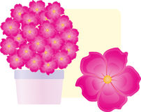 Flowers rosy Stock Images