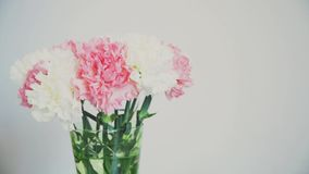 Flowers, rotation on white background, floral composition consists of Carnation stock video footage