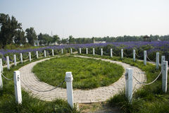 Flowers, round, lawn, railings, lavender, Royalty Free Stock Photography