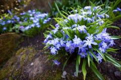 Flowers. In Royal Botanic Garden (Edinburgh, Scotland, UK stock image