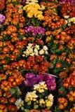 Flowers. Royal Park Rajapruek. Chiang Mai province. Thailand Stock Image