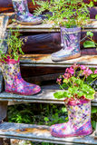 Flowers in a rubber floral knee boot for garden decoration Stock Images