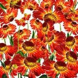 Flowers of rudbekia Royalty Free Stock Image