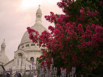Flowers of Sacre Coeur, Montmartre. Stock Images