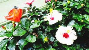 Flowers in a Saigon park stock photo
