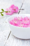 Flowers of sakura blossoms in a bowl Stock Photography