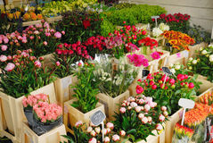 Flowers for sale in Amsterdam Stock Images
