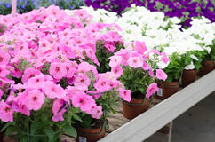 Flowers for sale Royalty Free Stock Photography
