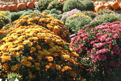 Flowers for Sale!. Flowers on sale at the farmers market royalty free stock photo