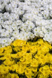 Flowers for sale. From flower market, Bangkok Royalty Free Stock Photos