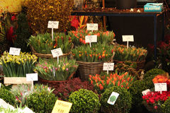 Flowers for sale. Flower shop in the Flower market in Amsterdam, Holland. Colored tulips Royalty Free Stock Photography