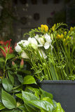 Flowers for Sale on Market Stall in San Marcos Square Royalty Free Stock Photos