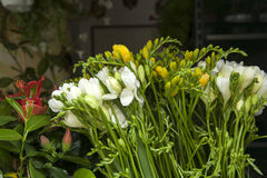 Flowers for Sale on Market Stall in San Marcos Square Royalty Free Stock Photo