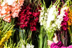Flowers for sale at Peruwian market in South America. Royalty Free Stock Photo