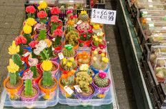 Flowers on Sale in a Street Market stock image
