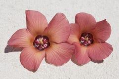 Flowers on the sand. Stock Photos