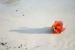Flowers on the sand. Royalty Free Stock Photography