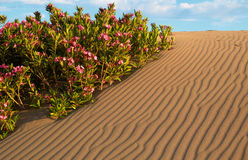 Flowers in sand Stock Photography
