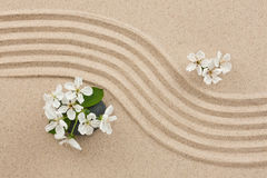 Flowers on the sand Royalty Free Stock Photo