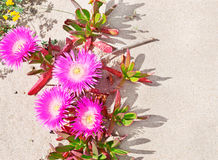 Flowers and sand Stock Image