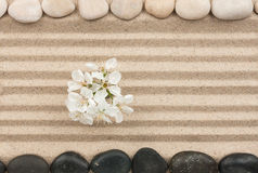 Flowers on the sand between the stones Stock Photo