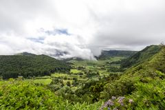 Flowers in Sao Miguel. Flowers and beautiful green pastures near Sete Cidades on Sao Miguel royalty free stock image