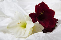 Flowers on satin. Big flowers on a soft satin background Royalty Free Stock Photo