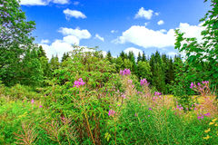 Flowers scene in the mountains of the Black Forest Germany. Royalty Free Stock Photography