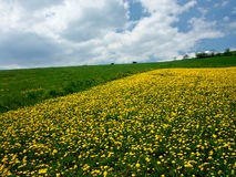 Flowers in scenic countryside Stock Images
