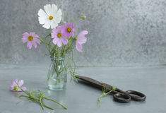 Flowers and scissors on a metal background. Close up royalty free stock photography