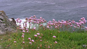 Flowers at the Sea stock footage