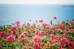 Flowers and sea background Stock Photos