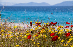 Flowers by the sea. Kineta beach, Greece. Royalty Free Stock Images