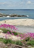 Flowers by the sea Stock Image