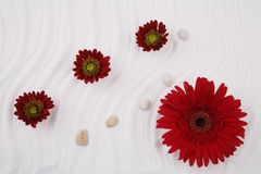 Flowers and sea salt. Red flowers, stones and sea salt - a still-life in style SPA Stock Photography