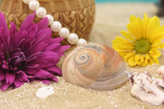 Flowers and Sea Shells Royalty Free Stock Photography