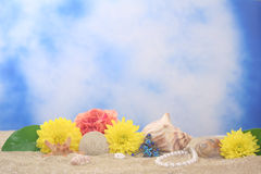Flowers and Sea Shells. On Sand With Blue Background Stock Photos