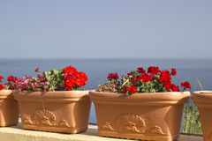 Flowers and sea Royalty Free Stock Photography