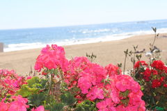 Flowers with sea view. Beautiful landscape Stock Photography