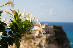 Flowers by the sea, view of santa maria dellísola Royalty Free Stock Image