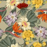 Flowers. Seamless  background.  Exotica.  Tropics. Flowers. Seamless  background. Vintage illustration. Tropics. Vegetable pattern. Botanical theme Royalty Free Stock Photography