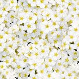 Flowers Seamless pattern Royalty Free Stock Images