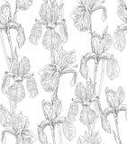 Flowers seamless pattern background line illustration iris. Floral design elements. Stock Photos