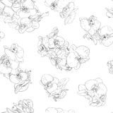 Flowers seamless pattern background line illustration orchids. Floral design elements. Royalty Free Stock Photos