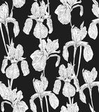 Flowers seamless pattern background silhouette illustration iris. Floral design elements. Garden flowers seamless pattern background vintage silhouette Stock Photos