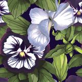Flowers Seamless Pattern composed of watercolor. Flowers Seamless Pattern , violas on dark background Royalty Free Stock Photo